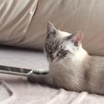 ドコモiPhone6s