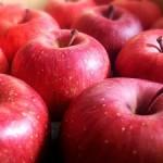 りんご狩り長野県