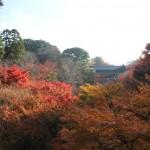 京都の紅葉の時期と見ごろ情報!おすすめの秋の観光シーズンは?