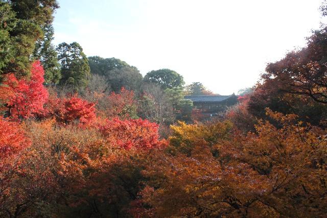 京都東福寺通天橋紅葉