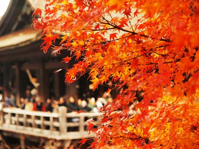 京都清水寺舞台紅葉