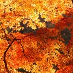 京都の紅葉ライトアップおすすめ穴場スポット!隠れた名所ランキング