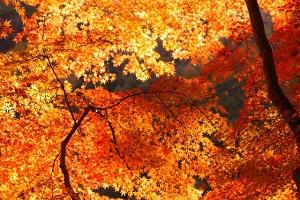京都紅葉ライトアップ穴場