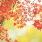 京都の紅葉のおすすめ穴場スポット!お抹茶可の隠れた名所ランキング