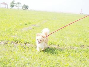 松本農園みかん狩り