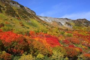 北海道大雪山紅葉