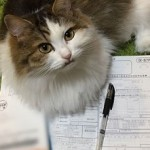 年末調整保険料控除申告書