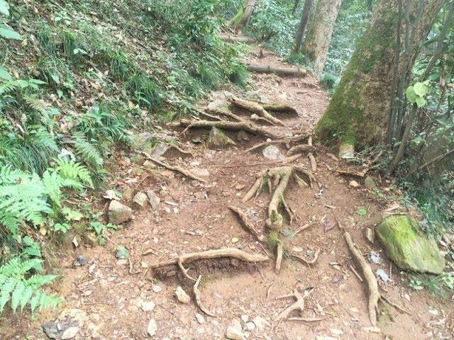 高尾山いろはの森登山道