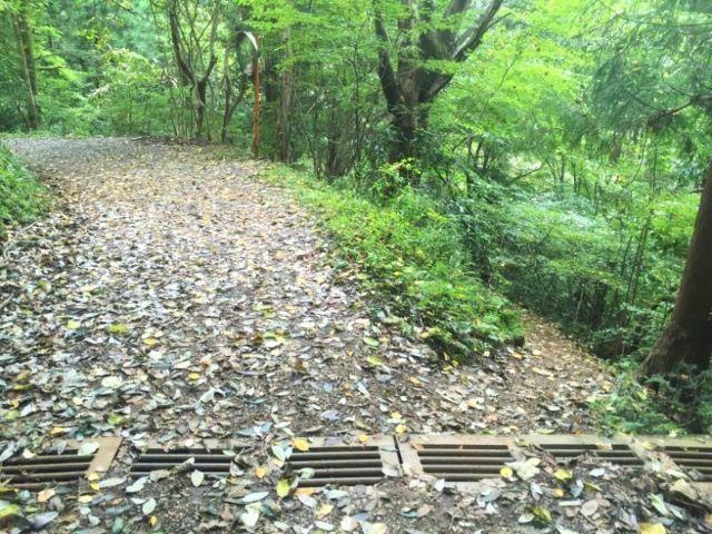 高尾山いろはの森分岐