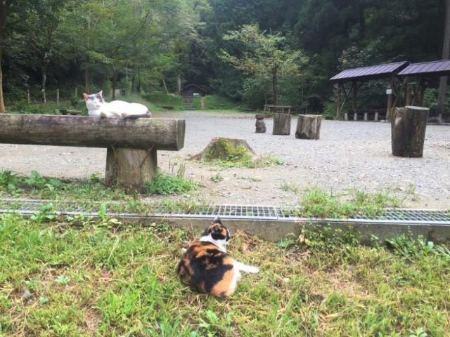 高尾山日影沢キャンプ場