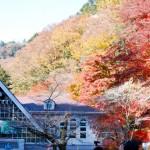 高尾山の紅葉見頃時期と混雑予想!ケーブルカー待ち時間とコース状況