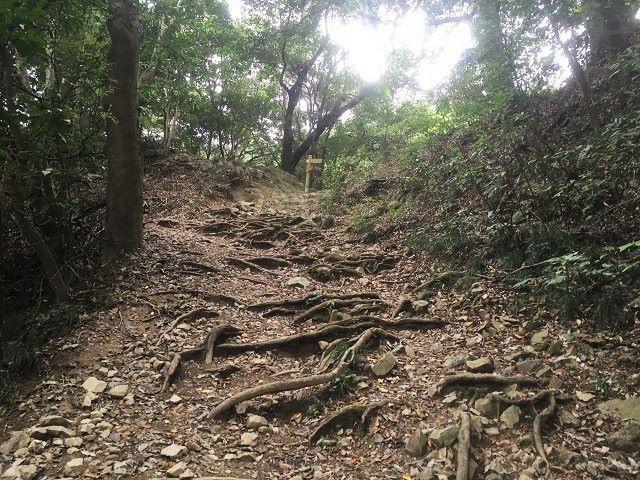 高尾山上級者コース登山道