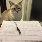 年末調整の保険料控除申告書の書き方記入例!地震・社会・小規模企業