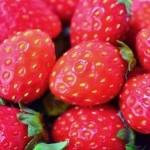 静岡県イチゴ狩りのおすすめ農園!食べ放題時間無制限ランキング!