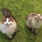 猫の引越しの長距離移動の費用比較!車・電車・飛行機・専門業者