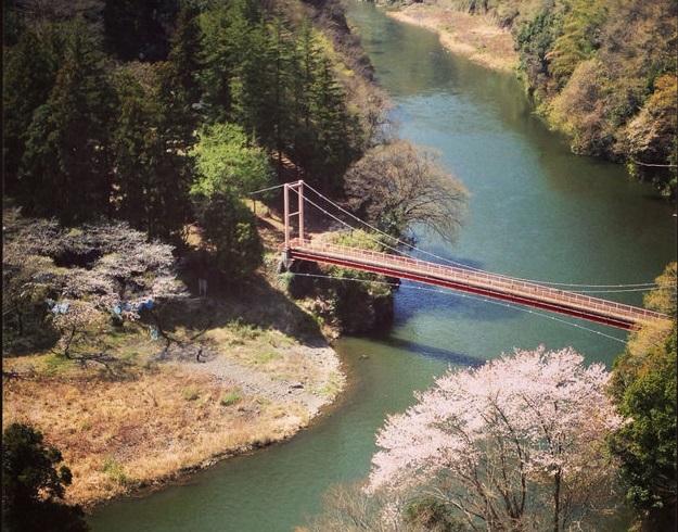 小仏城山弁天橋桜