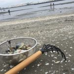 千葉ポートタワー潮干狩りの無料の貝速報2017!4月のアサリ成果報告